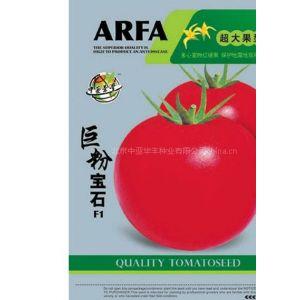 供应长期抗病毒番茄|番茄种子大全|