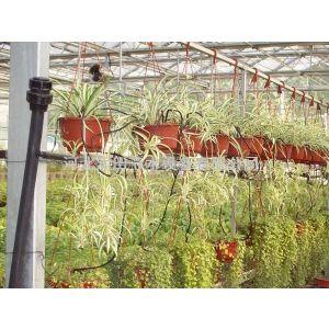 供应花卉盆栽滴箭|1/4滴箭系统|滴箭生产厂家
