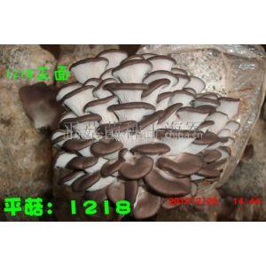 供应食用菌技术培训 菌种制作技术培训 母种原种