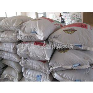 供应供应鲁梅克斯种子、墨西哥玉米种子、普那菊苣种子、苏丹草种子、籽粒苋种子