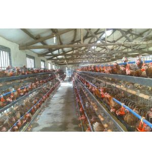 供应万得福鸡如凤高效营养素