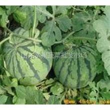 供应山东青州西瓜批发/代收/供应/销售:15865481895