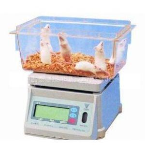 供应DST671称量实验兔电子秤