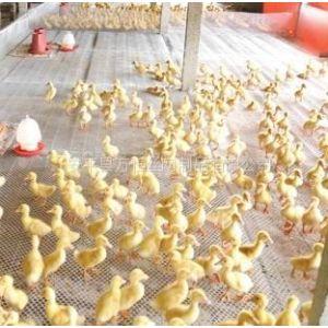 供应塑料养殖网的规格有哪些/pvc绿色塑料平网/大孔养鸭塑料围网厂家
