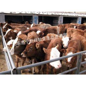供应哪个品种的肉牛好养抗病力强,今年养殖什么品种的肉牛效益高利润大