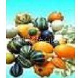 供应玩具南瓜种子