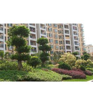 中山绿化施工保护,园林绿化设计,绿化施工方案,专业