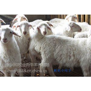 供应供应肉皮兼用多胎湖羊(羊羔,种羊,种公羊)