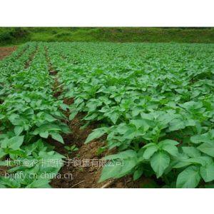 供应供应优质脱毒、高产、极早熟商品性马铃薯