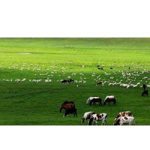 武汉温泉一日游武汉周边木兰草原休闲拓展一日游 去草