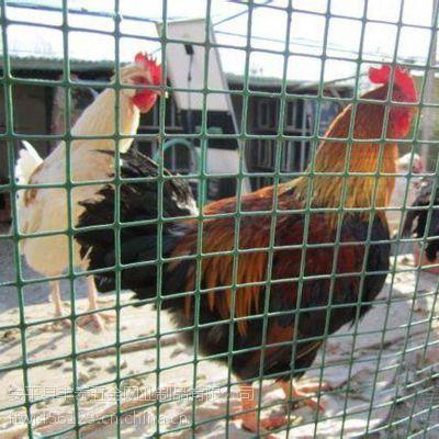 厂家热销荷兰网铁丝 山鸡养殖围网 防护围栏网