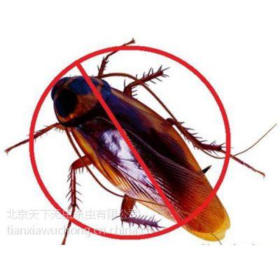 家庭灭蟑螂 公司|卢沟桥家庭灭蟑螂|天下无虫(在线咨询)
