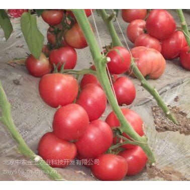 中农一号-番茄种子,抗ty线虫番茄种子