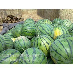 供应陕西西瓜种植销售基地大棚京欣西瓜产地价格