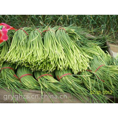大蒜、蒜薹、蒜片的销售和种植