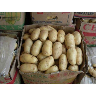 胶州土豆出库价格15153715701刘进