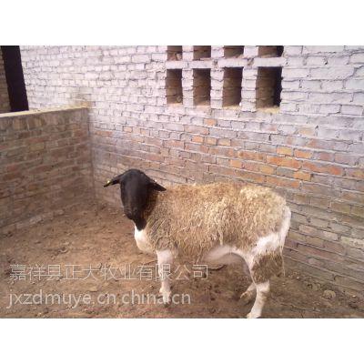 肉牛养殖场视频-肉牛论坛