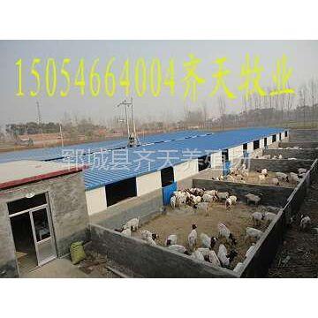 供应安徽适合养殖什么羊 郓城的肉羊养殖场