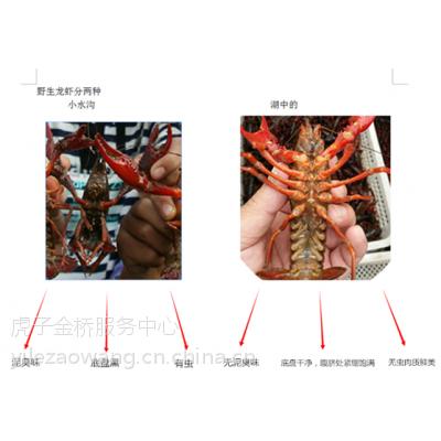 大湖旅行社湖珍美龙虾