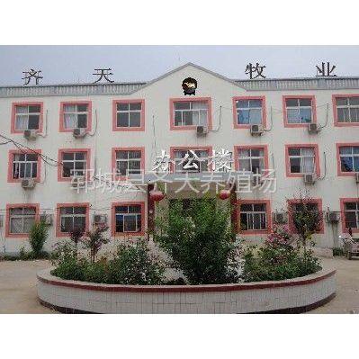 供应山东省菏泽市的波尔山羊养殖场——齐天牧业