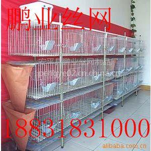 河北新型鸽子笼生产厂家怎么样 鸽子笼哪里有卖的