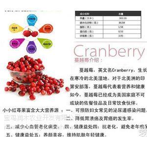 厂家供应 蔓越莓提取物原花青素25%规格 价格