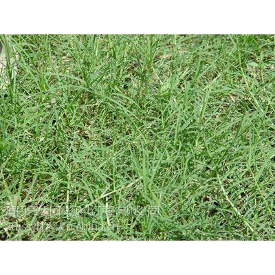 供应大量批发草种,花卉种子,及种苗