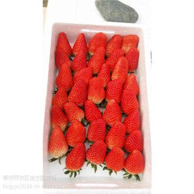 章姬草莓苗行情,昭通章姬草莓苗,世杰园艺场(在线咨询)