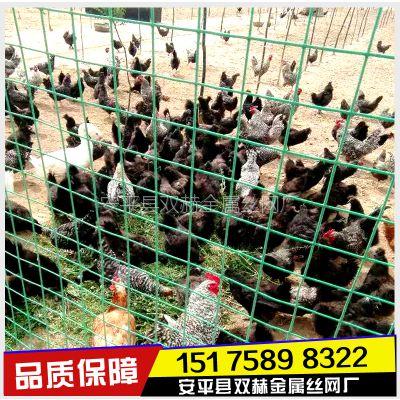 山东养殖铁丝网 散养鸡围栏网 【优质产品 质量保障】