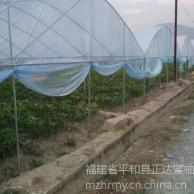 广西三红蜜柚苗哪里买才正宗,广西三红柚子苗|果树苗种植