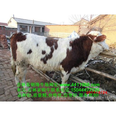 那丹伯镇养牛合作社