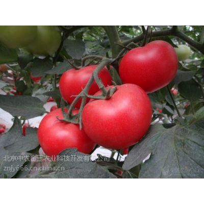 供应荷兰超早一号-早熟番茄种子
