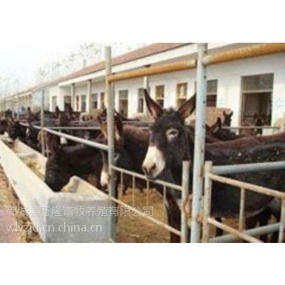 万隆牧业(图)、哪里卖种驴、菏泽种驴