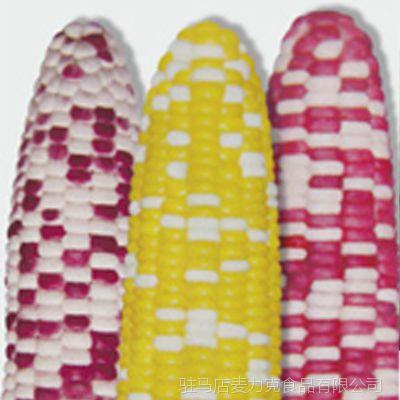 速冻果蔬 新鲜优质玉米棒无公害产品 质量保证厂家供货 颗粒饱满