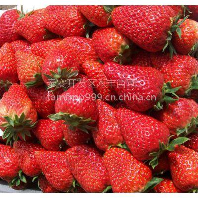 供应草莓苗、红颜、章姬法兰地草莓苗品种纯、量大优惠