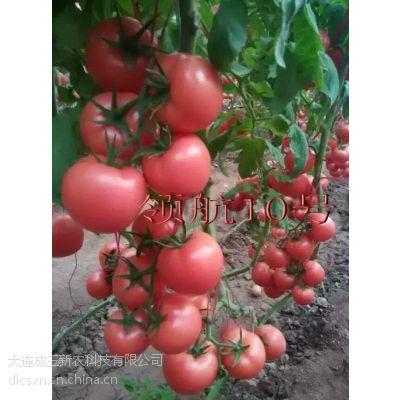 供应进口硬粉果西红柿种子—领航10号