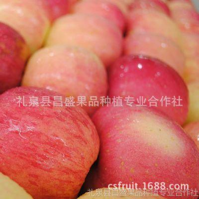 供应新鲜水果苹果批发 新鲜陕西早熟富士王苹果价格 礼泉产地批发部