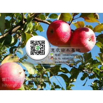 辽宁矮化岳冠苹果苗