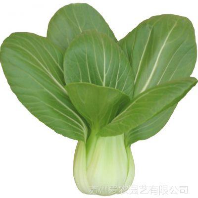 阳台盆栽蔬菜种子 爱乐农上海青小油菜种子50