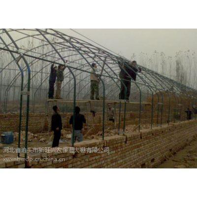 新旺兴农供应建设保温大棚0924养植大棚