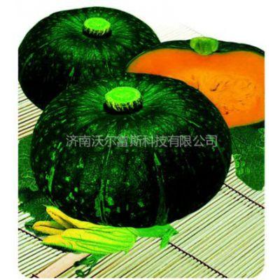 供应博雅一号F1(品质好、产量高绿皮南瓜种子)