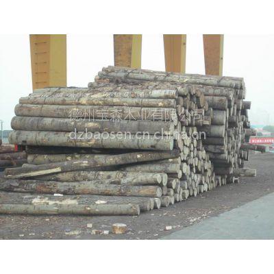 宝森木业 进口俄罗斯杨木原木、杨木方木、品质保障、宝森