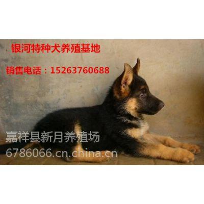 哪里有卖德国牧羊犬的,纯种德国牧羊犬幼犬价格