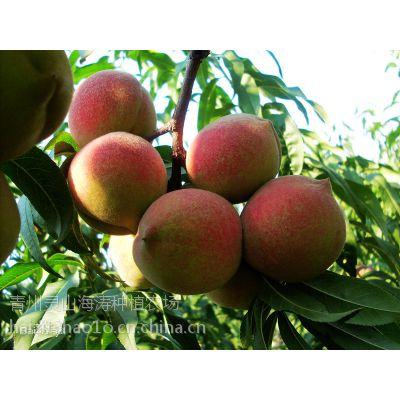 品质好的蜜桃出售 青州蜜桃出售