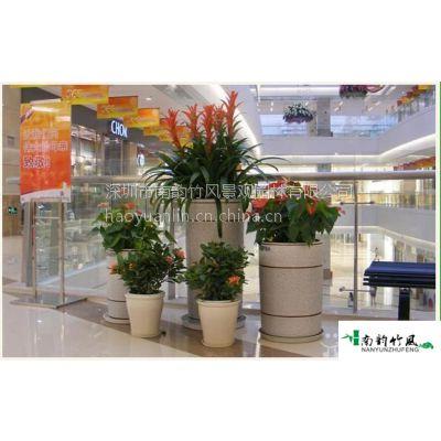 供应商场植物盆栽租赁园林公司南韵竹风服务!