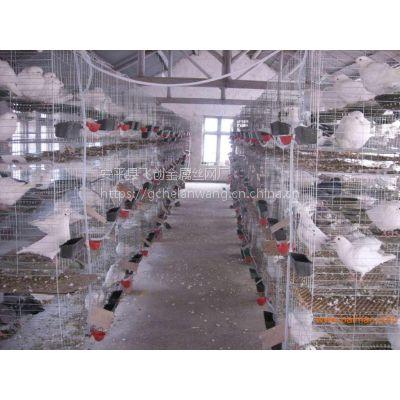 山东威海鸽子笼@三层十二位鸽笼批发,铁丝网配对鸽笼@镀锌1.5米13383380113李