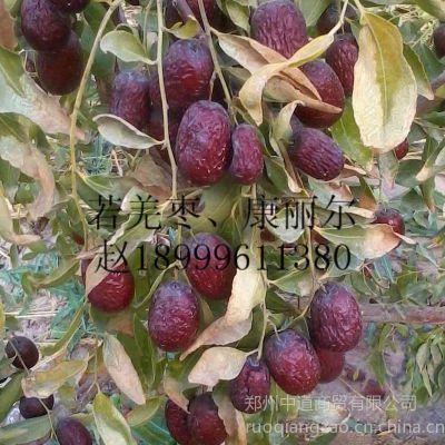 """供应新疆若羌红枣价格行情走势""""若羌枣、康丽尔一级灰枣"""