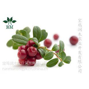 宝鸡润木现货进口蔓越莓 蔓越莓粉