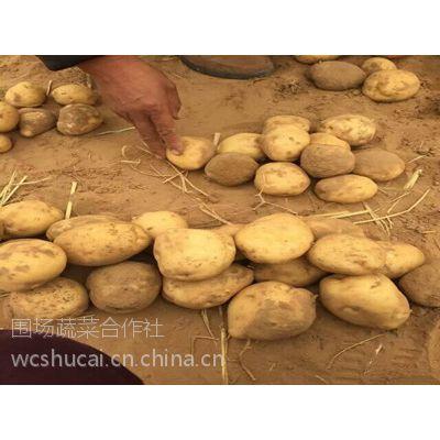 多伦胡萝卜代收围场土豆代收133-6388-1918沽源宝昌土豆经济人