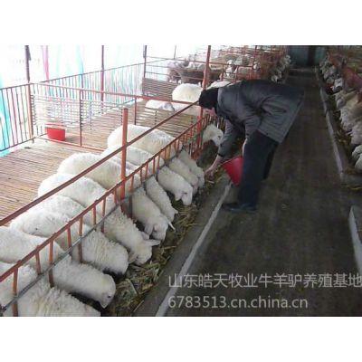 供应供应揭阳养羊场肉羊价格小羊多少钱 ,成品羊卖给谁